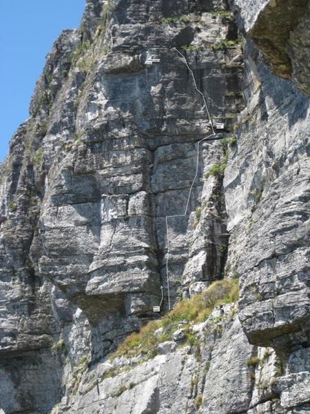File:Flaky Dog Upper Africa Ledge Table Mountain V1.PNG