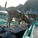 Floating village dogs sniff us out we make our landing