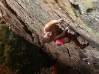 Steve Bradshaw on his route at Oorlogs Kloof