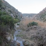 Montagu Mountain Reserve neglect