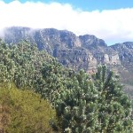 Table Mountain Fencing
