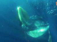 Whale diver escape