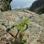 Tree growing in rock crack