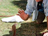 Snake rescue catch release