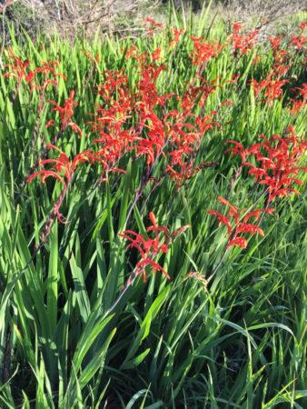 Kalk Bay flora