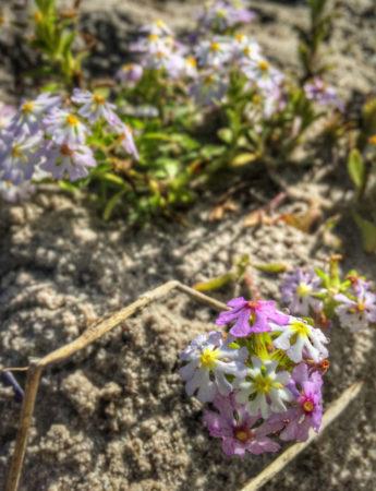 Steenbok Flower Trail