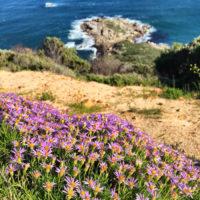 maori bay bos 400 trail