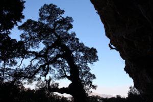 Alex Bester climbing T-pex,27,Photo PW Nel